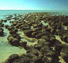 stromatolites photo