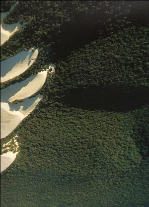 photo showing the colour of virgin forest