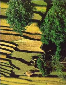 photo of rice fields